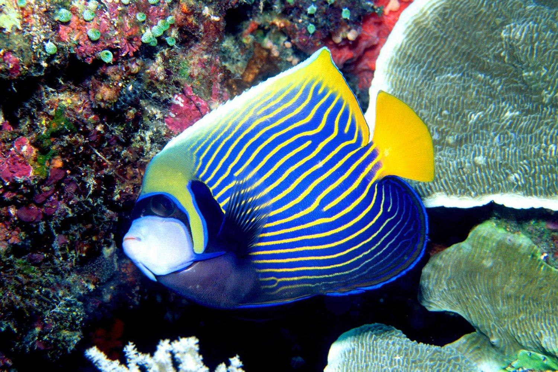 Ocean Aquarium Park