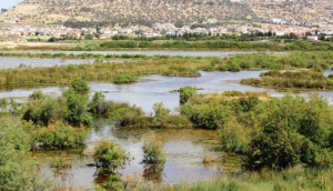 Oroklini Lake