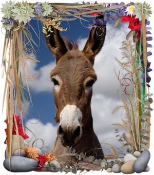 Donkeys of May