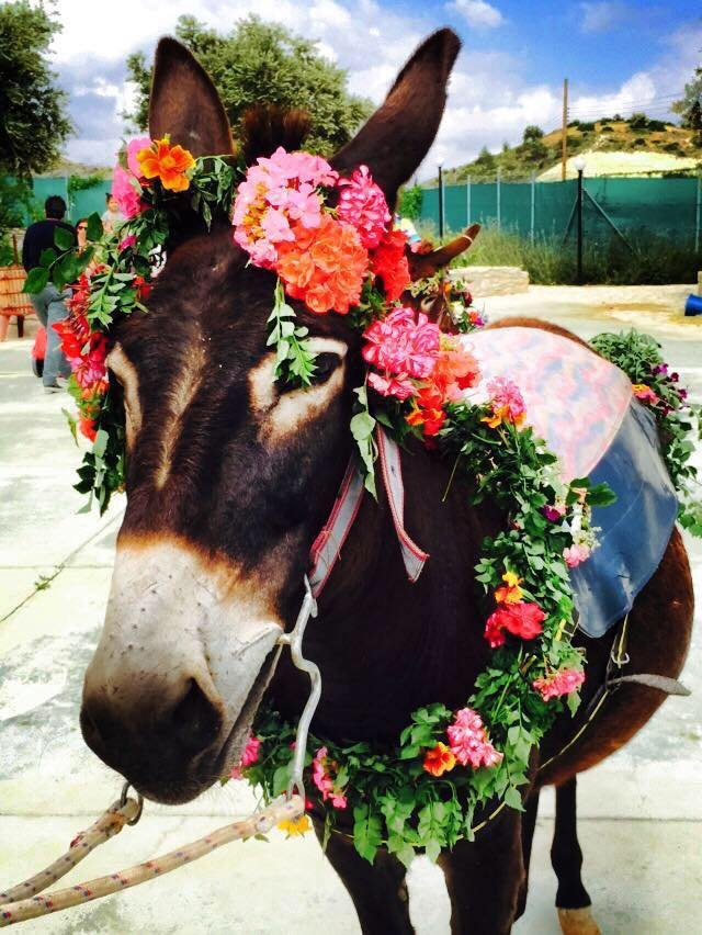 May Day Donkey Festival