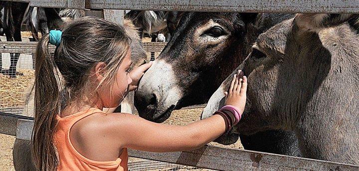 Sundays at Golden Donkeys Farm