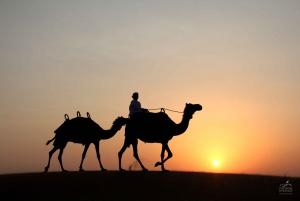 Desert Safari with Camel Ride