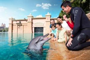 Dolphin & Sea Lion Photo Fun at Atlantis