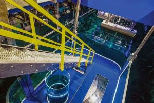 Dubai Aquarium and Underwater Zoo Day Ticket