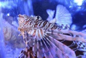Dubai Aquarium and Underwater Zoo Explorer Ticket