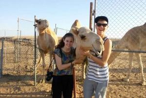 Dubai: Dune Quad Drive, Camels And Sand Boarding