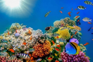 Dubai: PADI Open Water 18-Meter Diving Certification
