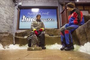 Dubai: Ski Dubai Penguin Encounter Tickets