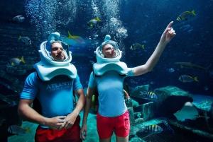Dubai: The Lost Chambers Aquarium Atlantis Aqua Trek