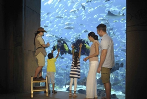 Dubai: The Lost Chambers Aquarium Entrance Ticket with Lunch