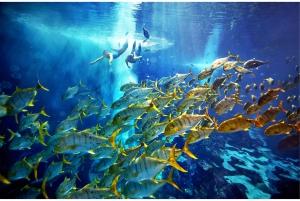 Dubai: The Lost Chambers Aquarium Ultimate Atlantis Snorkel