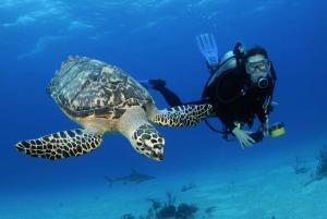 From Dubai: Fujairah Half-Day Scuba Dive and Snorkeling