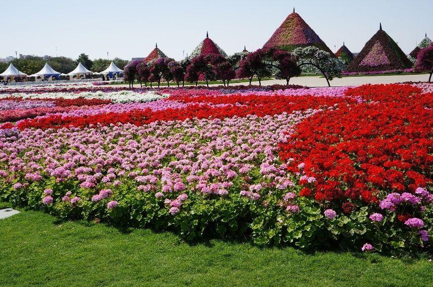miracle garden in dubai my guide dubai