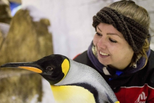 Ski Dubai Penguin Encounter Tickets