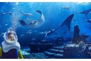 The Lost Chambers Aquarium Atlantis Aqua Trek