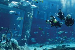 The Lost Chambers Aquarium Atlantis Diving Experience
