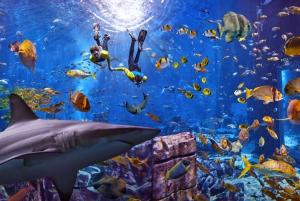 The Lost Chambers Aquarium Ultimate Atlantis Snorkel
