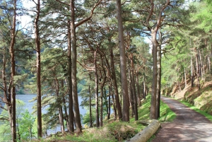 Wicklow Mountains Half-Day Rail Tour from Dublin