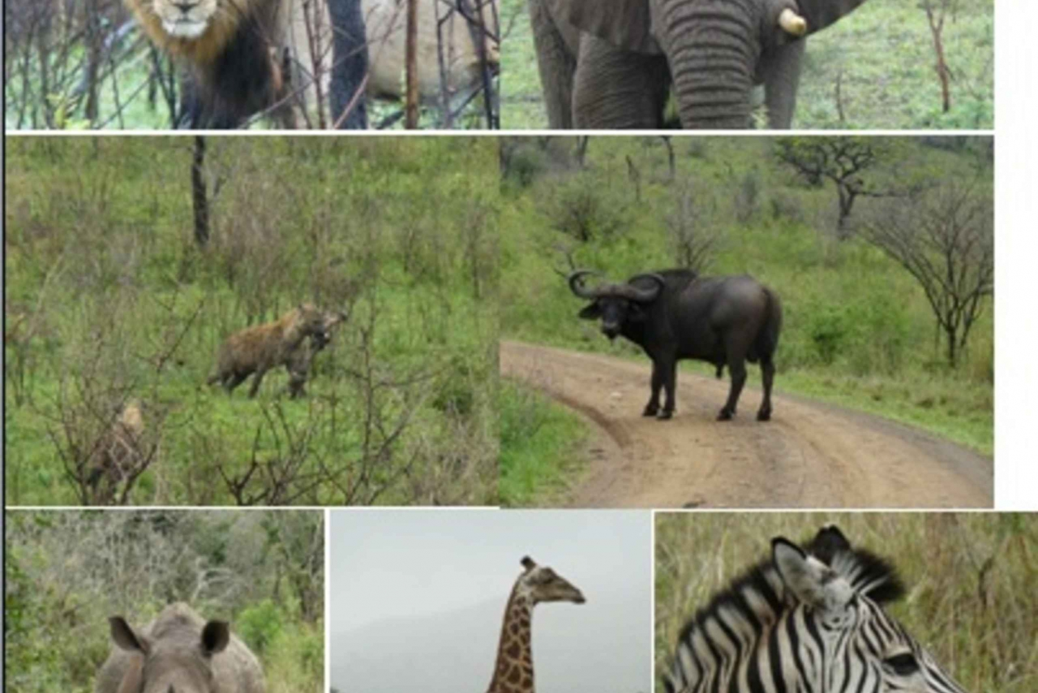 3-Day Hluhluwe Umfolozi Game Reserve & St. Lucia Safari