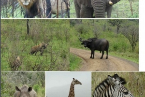 3-Day Hluhluwe Umfolozi Game Reserve & St. Lucia Safari