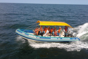 Boat-Based Whale Watching Experience