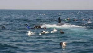 Calypso Dive