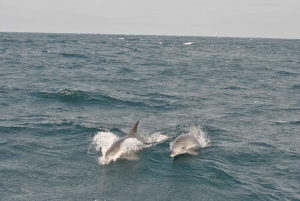 Durban: Boat-Based Whale Watching Experience
