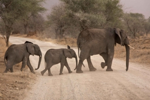 Durban: Full-Day Big 5 Private Game Reserve Safari w. Lunch