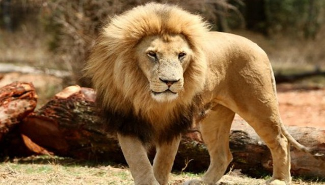 Durban Safaris.com