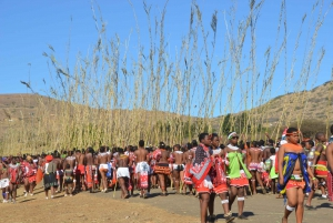 From Durban: Full Day Annual Royal Reed Dance Tour