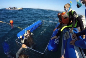From Durban: Shark Cage Diving Experience