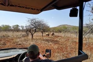 From Durban: Wildlife Lovers Big 5 Safari at 2 Game Reserves