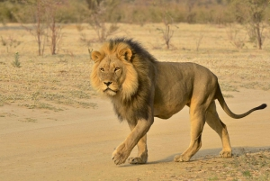 From Half-Day Private Safari Tour