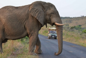 From Hluhluwe Imfolozi Game Reserve Private Tour