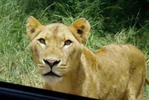 From Safari & PheZulu Village Day Tour