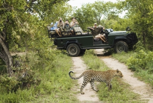 Full-Day Big 5 Private Game Reserve Safari w. Lunch