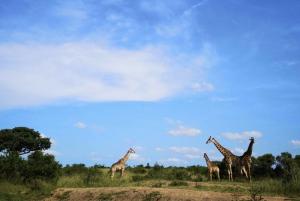 Hluhluwe Big 5 Safari with Pro Zeiss Binoculars