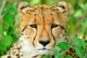Hluhluwe-Imfolozi & Emdoneni Wild Cat Project Private Tour