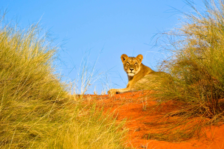 Hluhluwe Imfolozi Safari + iSimangaliso Wetlands Day Tour
