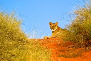 Private Hluhluwe Imfolozi Safari & iSimangaliso Tour