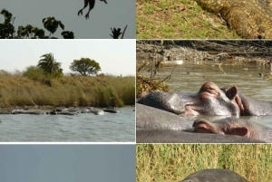 St. Lucia Wetlands & Estuary: Day Tour & Boat Safari