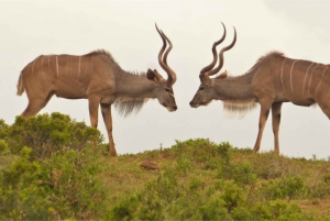Addo National Park: Full-Day Safari Tour