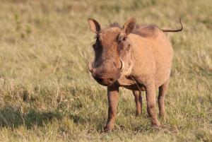 Addo National Park: Guided Half-Day Safari