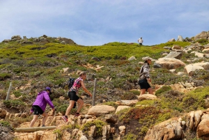 Cape Town: Full-Day Cape Point Hike & Nature Walk