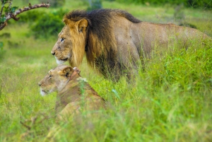 Colchester: Full-Day Addo Elephant National Park Tour