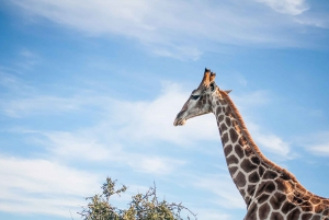 From Cape Town: Garden Route, Addo and Winelands 7-Day Tour