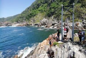 From Port Elizabeth: Tsitsikamma Walks and Activities Tour