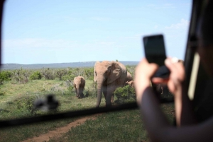 Full-Day Safari with Traditional Braai'd Lunch