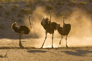 Garden Route and Addo: 5-Day Tour from Cape Town