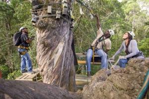 Garden Route National Park: Tsitsikamma Zipline Canopy Tour